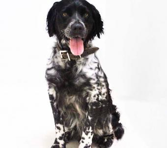 Asiel honden ter adoptie